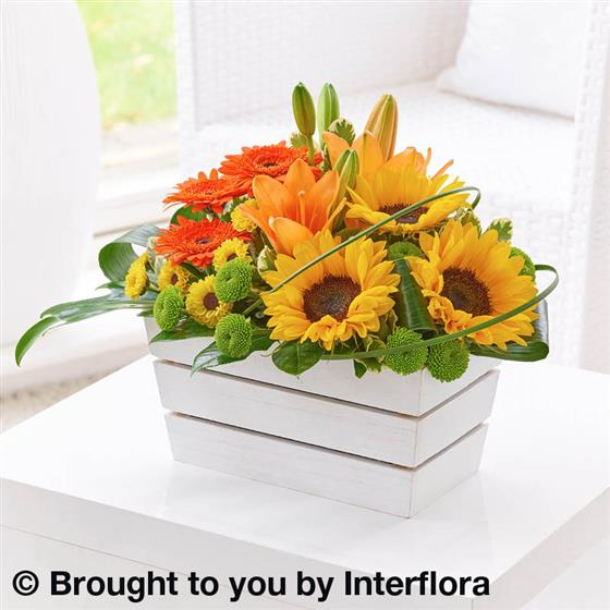 Lily, Germini & Sunflower Arrangement